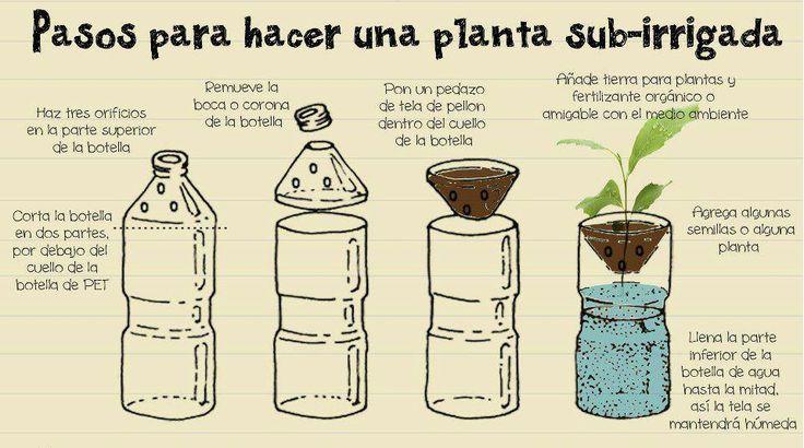 PARA NIÑOS CON CABEZA: Cómo hacer una planta autoirrigada