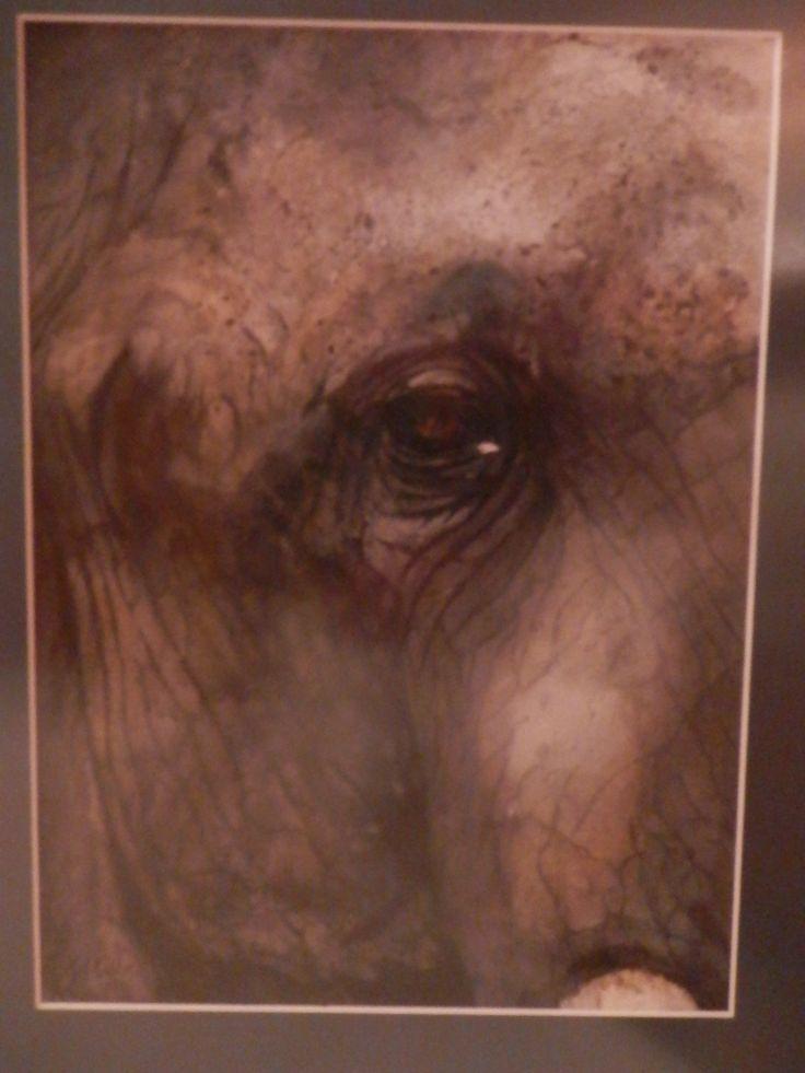 Elephant Eye - Gayner Vlastou