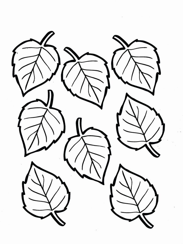 Coloring Page For Leaf