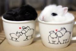 Bunnies in teacups? My heart is so happy!