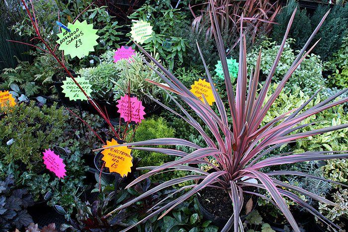 Цветочный рынок на Каледония стрит - Марк Григорян