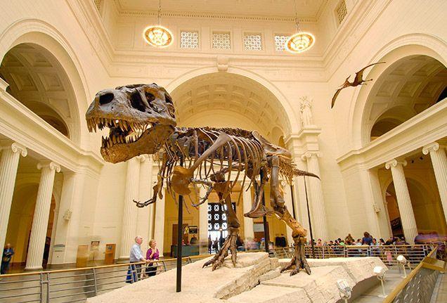 field-museum-636x431.jpg (636×431)