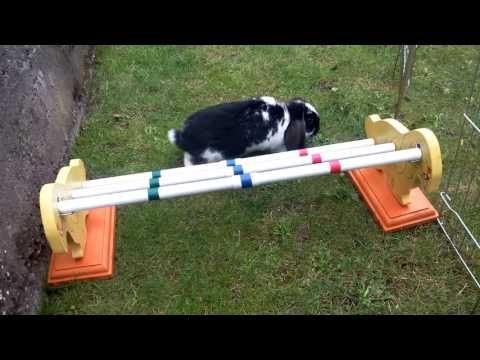 So Bringe Ich Meinen Kaninchen Kaninhop Bei Youtube Kaninchen