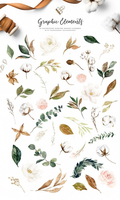 Magnolia Cotton Akvarelnye Illyustracii Narisovat Cvety