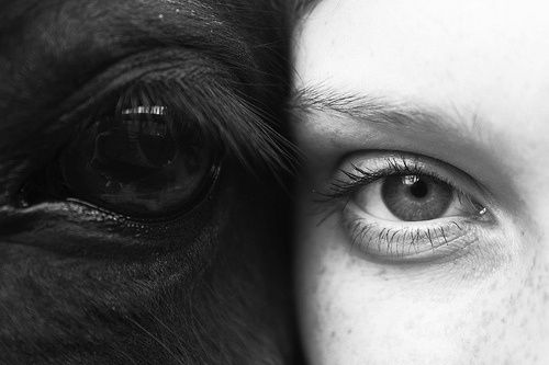 The beauty between horse and owner <3    #horse #beauty