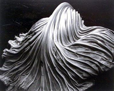 Cabbage leaf by Ed Weston