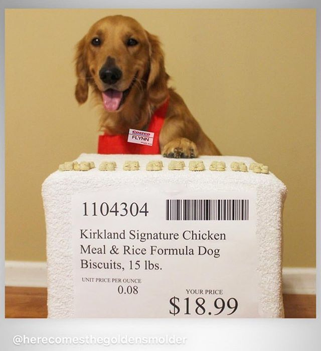 Costco Sample Dog Who Wants A Doggy Biscuit Costcodeals