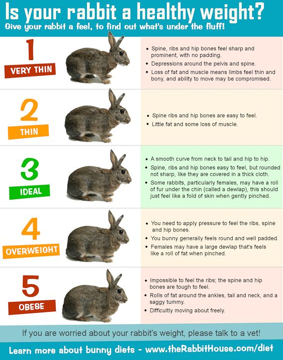 Is your pet rabbit the right weight? Use this body score chart to work out if your rabbit is too thin, too fat or just right.