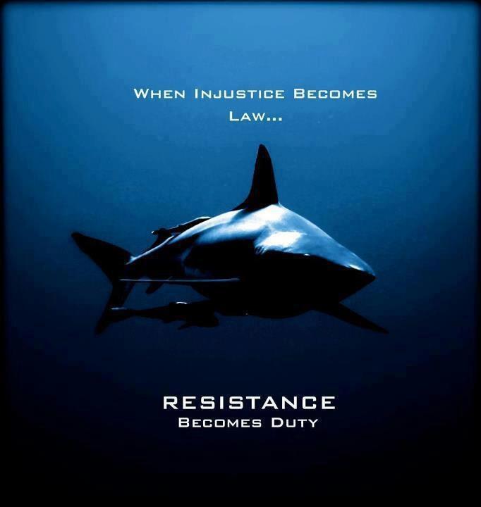 Sea Shepherd #seashepherd #taiji #coveguardians