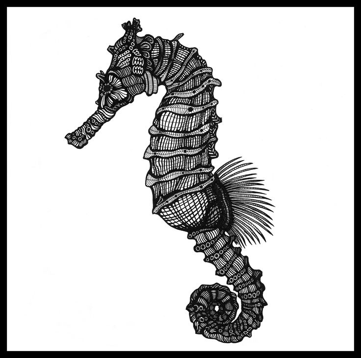 SEAHORSE. Ink on paper. Black and white. 30x30cm #deltakappadesign