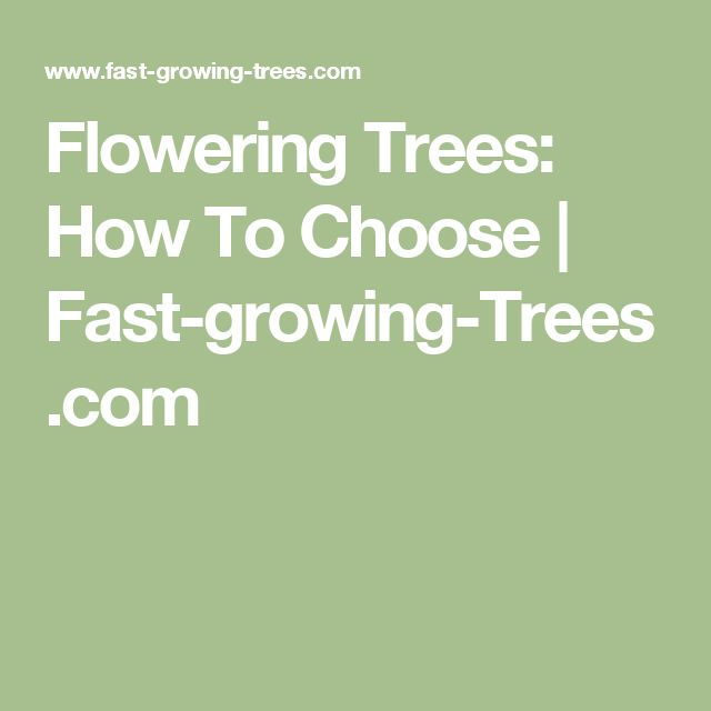 Flowering Trees: How To Choose | Fast-growing-Trees.com