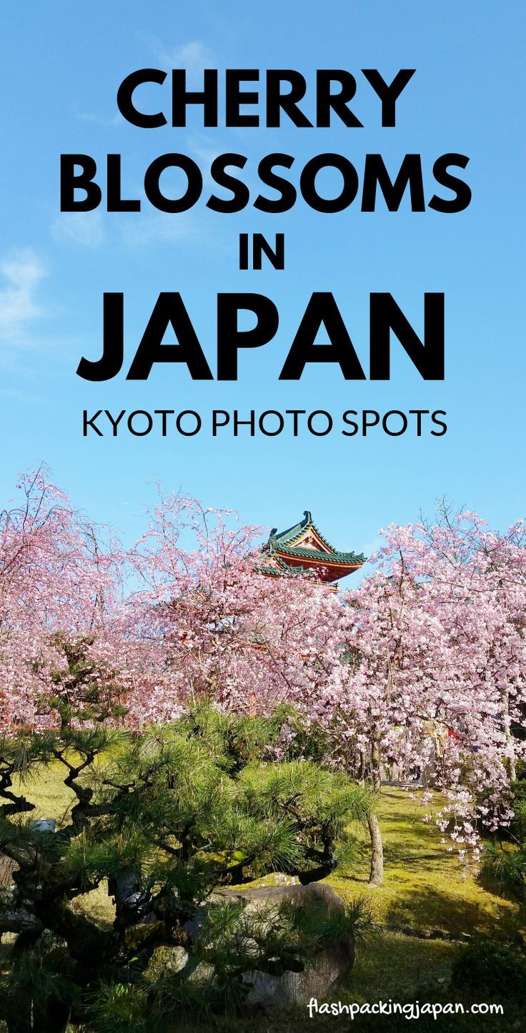 Best Places To See Cherry Blossoms In Japan Cherry Blossom Japan Japan Travel Japan Photography
