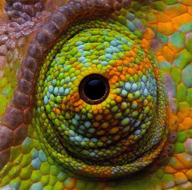 Best Animal Eyes Images On Pinterest Africa Animal Kingdom - 24 detailed close ups of animal eyes
