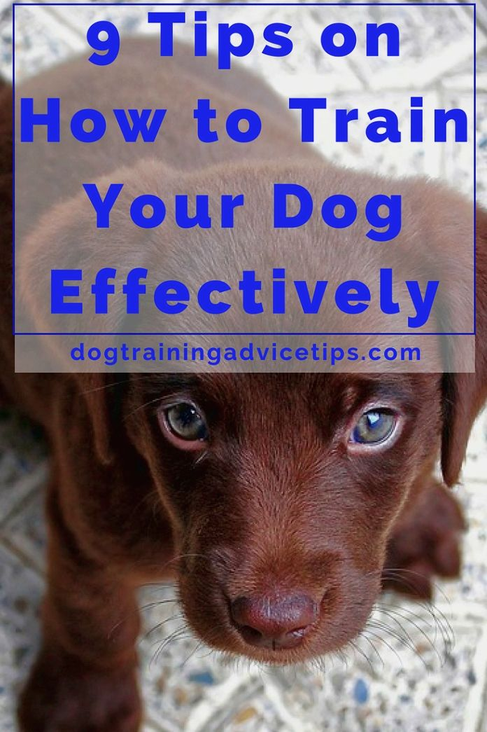 Dog Training Ideas Always Obtain Your Dog S Attention By Doing