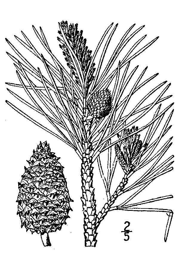 Line Art Java : Best plants images on pinterest browser extensions