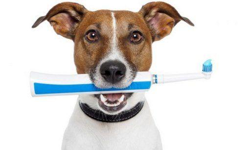 M Cepillar los dientes de los perros: por qué y cómo