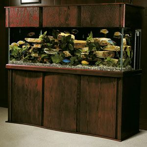 103 Best Aquariums Images On Pinterest Aquariums Fish