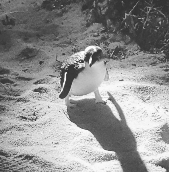 Go penguin-spotting.