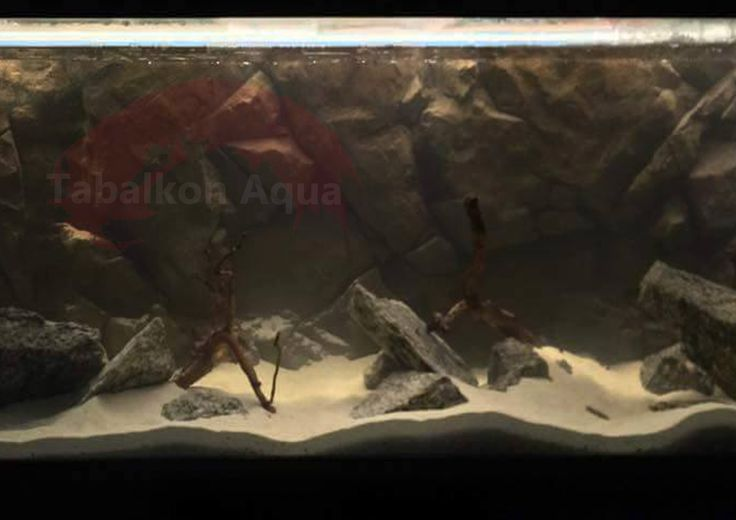 balık,  aquarium, biotope, tank, fish, malavi, akvaryum, biyotope, dizayn, yosun, demasoni, tanganyika lake, tabalkon, aqua, 3d, background, tanganyika, Aquascaping