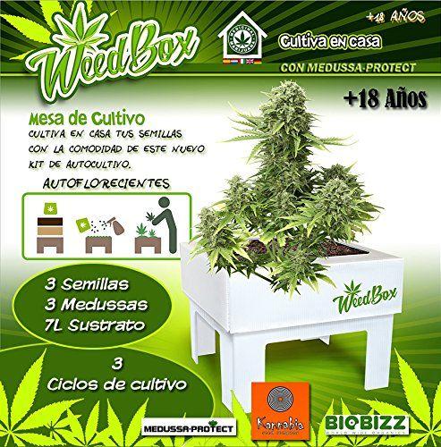 KIT DE CULTIVO Weedbox Kannabia Seeds MEDUSSA-PROTECT https://www.amazon.es/dp/B01EHIKCGW/ref=cm_sw_r_pi_dp_shPvxbR9CM11Z