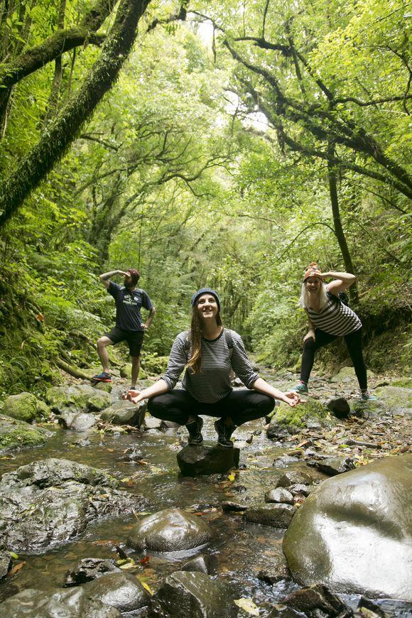 zen in the bush