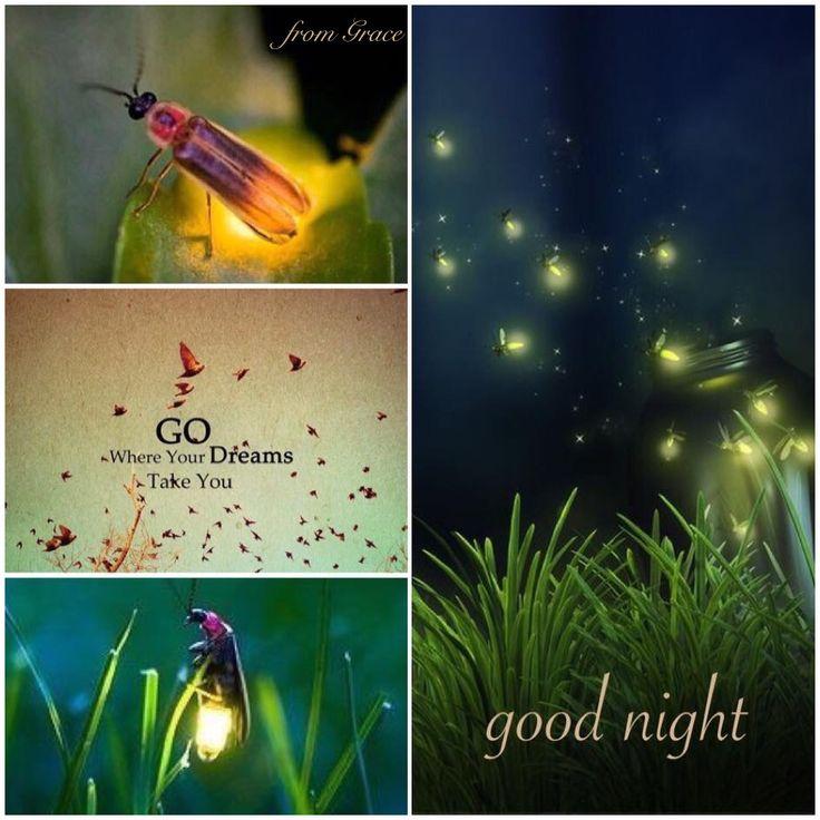Lights .. shining from fireflies ✨