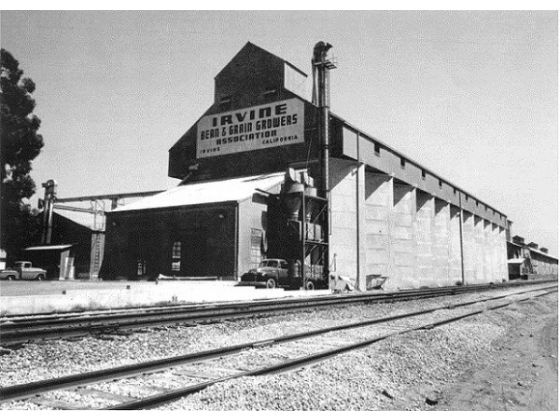 Irvine Bean & Grain growers