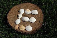 Ancient Hearth: Language Arts Block II: Vowels... Letter E & Felting Eggs
