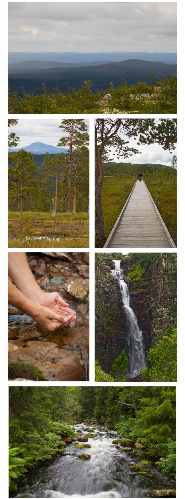Fulufjällets Nationalpark, Dalarna, Sweden
