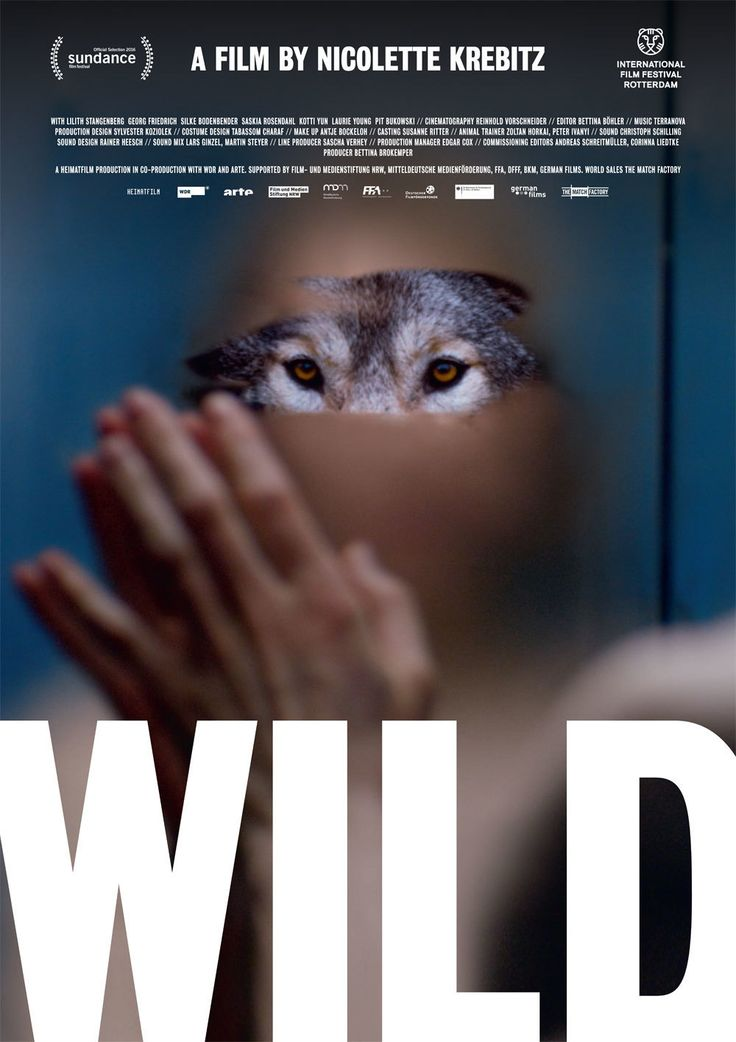 Wild (2015) FULL MOVIE. Click images to watch this movie