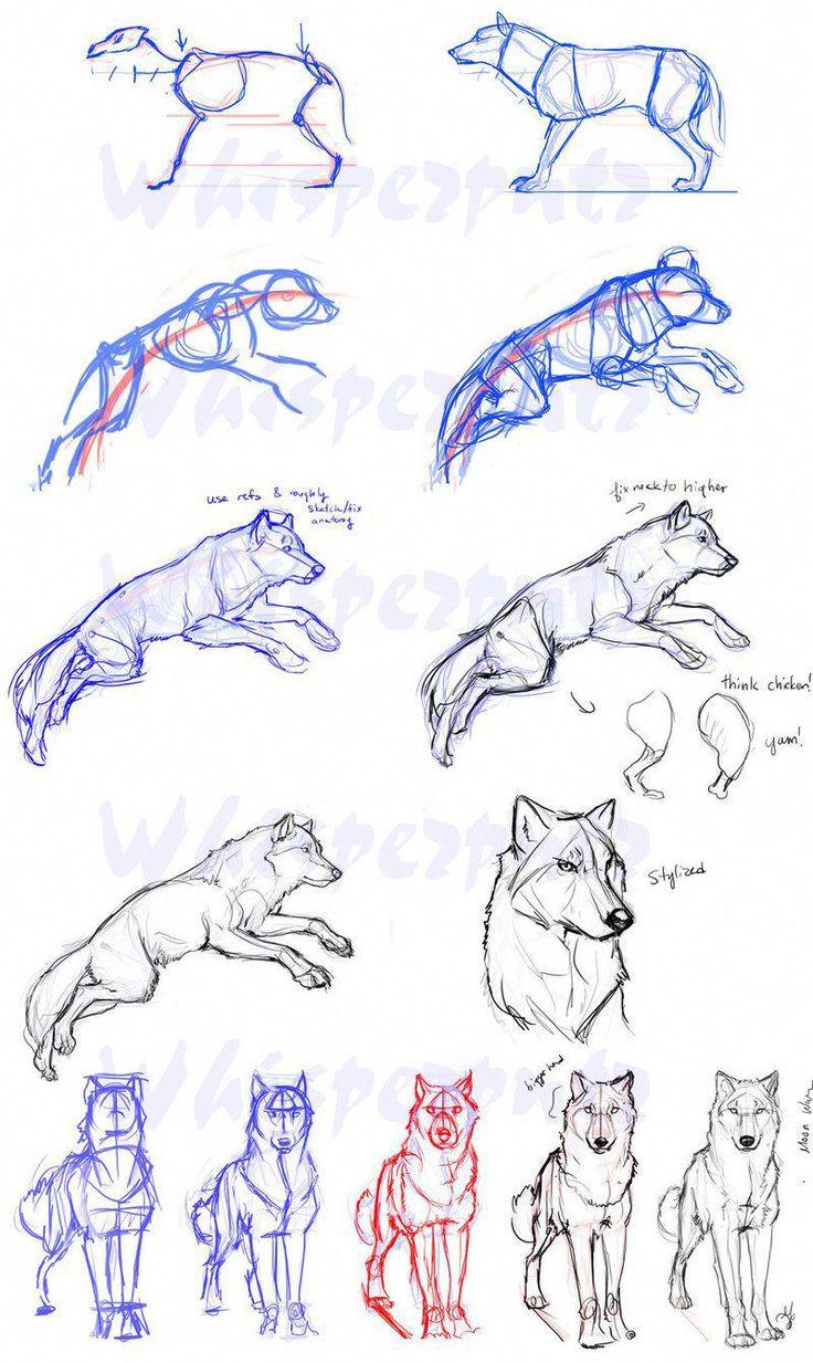 может рисунки поэтапно животные волк вино колбаса хлеб