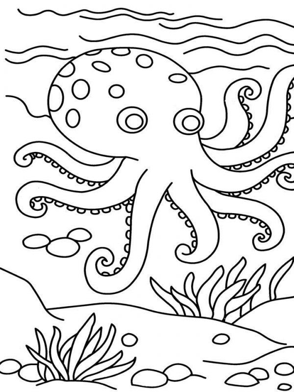 Octopus Printable Coloring Pages For Kindergarten Kids