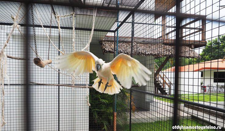 Попугай в Parrot Resort Moalboal