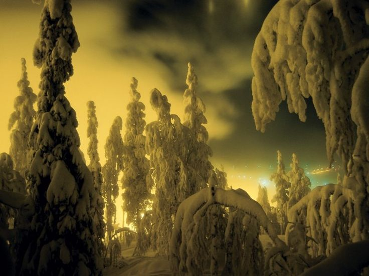The Forests of Lapland, near Rovaniemi, Finland, by Knut Bry