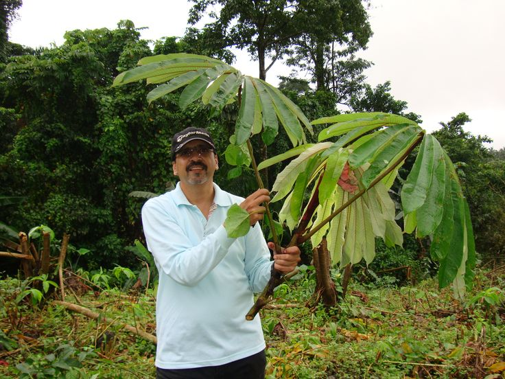 ravi somani with umbrella leaves