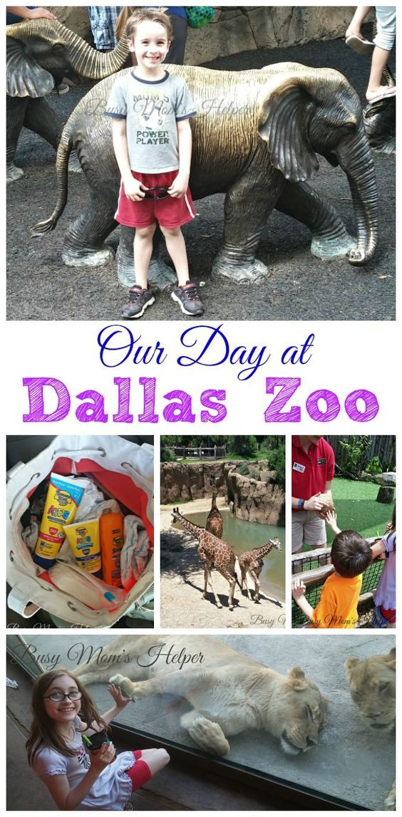 Our Day at Dallas Zoo - Texas by Busy Mom's Helper