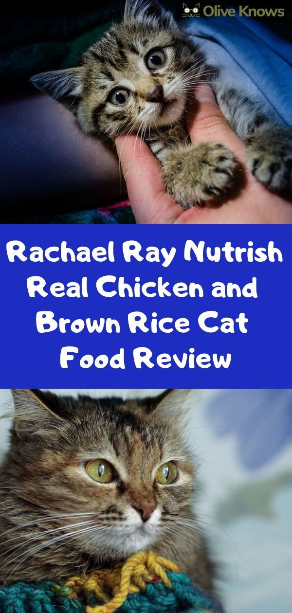 Rachael Ray Nutrish Real Chicken And Brown Rice Cat Food Review Oliveknows Chicken And Brown Rice Cat Food Reviews Cat Food