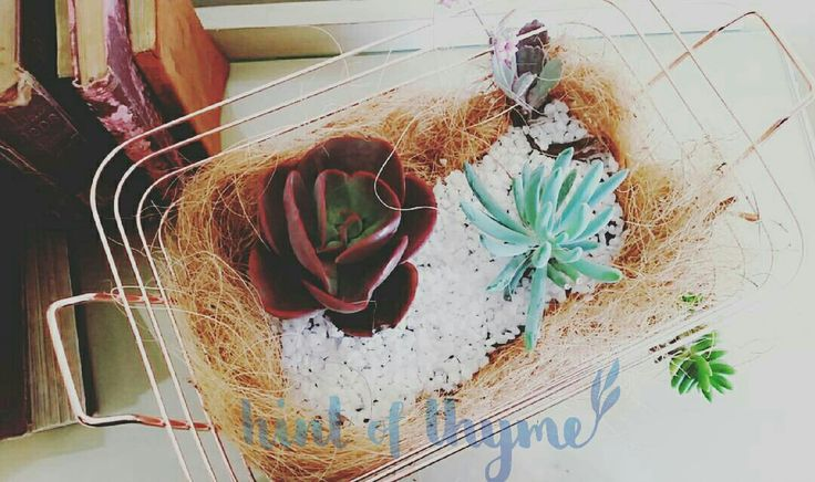 Copper basket heaven! Gorgeous succulent garden in a beautiful copper basket. ...what more could you want?!