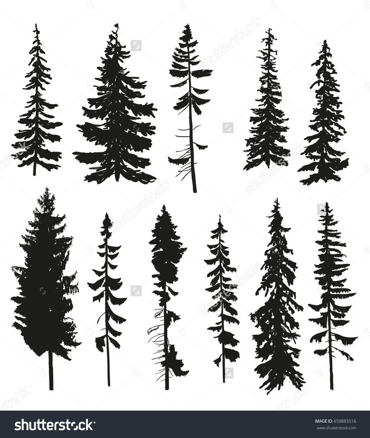 Vector Silhouettes Of Different Pine Trees. - 459883516 : Shutterstock