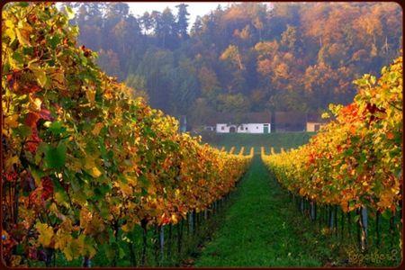 Vineyard in autumn - Photography Wallpaper ID 1218853 - Desktop Nexus Abstract