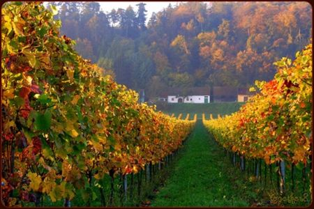 Vineyard in autumn - Photography Wallpaper ID 1218853 - Desktop Nexus Abstract