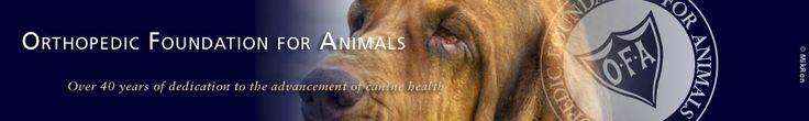 Orthopedic Foundation for Animals