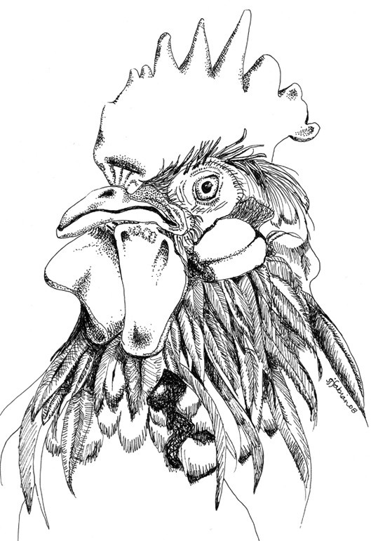 REGAL ROOSTER - Black and White - Line Art. $15.00, via Etsy.