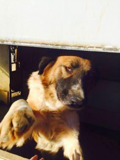 Δεν αξίζει αυτός ο σκυλάκος ένα σπίτι; - press4dogs.com