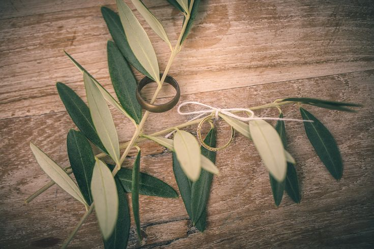 olive branches as ring holders