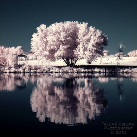 Cotton Candy Reflections