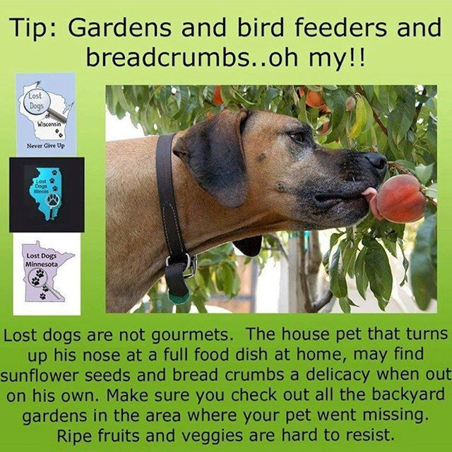Check Unconventional Food Sources For Signs That Your Missing Dog Has Been There Hungry Lost Dogs Will Visit Garde Losing A Dog What Cats Can Eat Losing A Pet