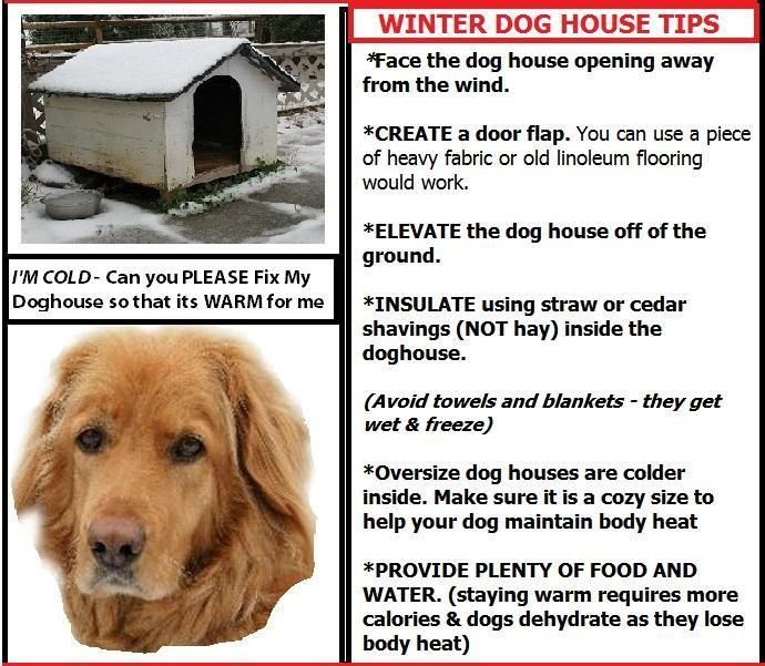 Winter Dog House Tips~ Or Bring Them In Where It Is Nice