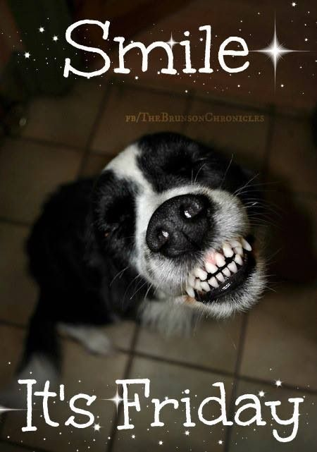 Smile ~ It's Friday  ~Black & white dog, sitting with a 'big' grin, shows all it's front teeth:)
