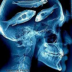 fish brain - photo #26